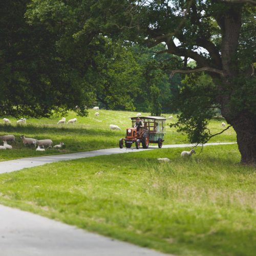 Vintage tractor taking bride to church through Homme House's parkland